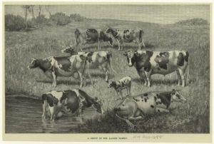 Nutztiere auf einer Weide